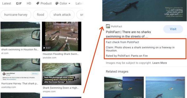 Google запустил ярлыки фактчекинга в поиске по картинкам